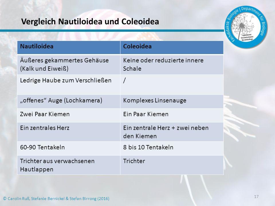 Vergleich Nautiloidea und Coleoidea