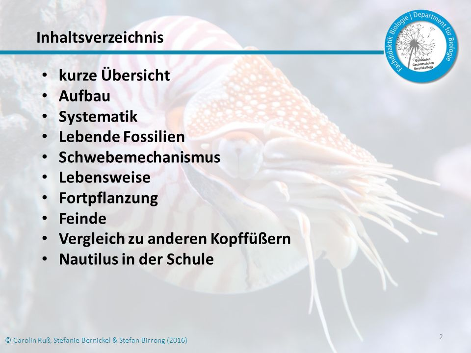 Vergleich zu anderen Kopffüßern Nautilus in der Schule