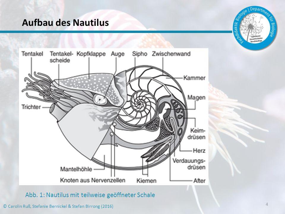 Aufbau des Nautilus Abb. 1: Nautilus mit teilweise geöffneter Schale