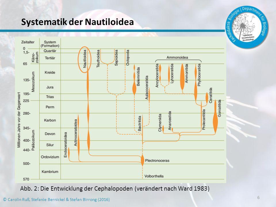 Systematik der Nautiloidea