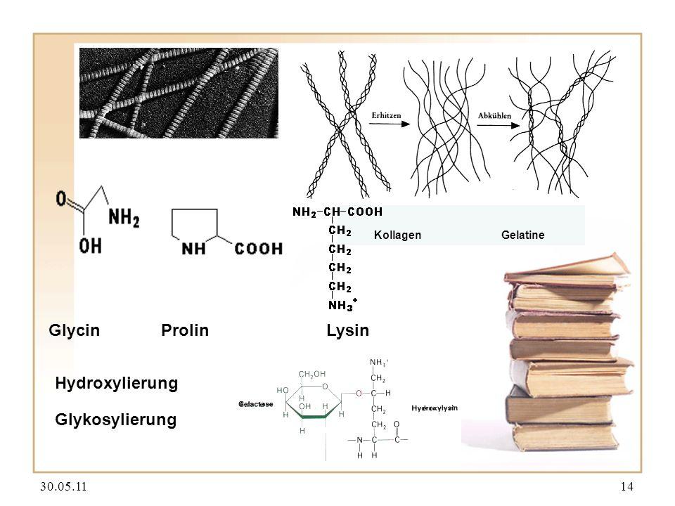 Glycin Prolin Lysin Hydroxylierung Glykosylierung 30.05.11 14 Kollagen