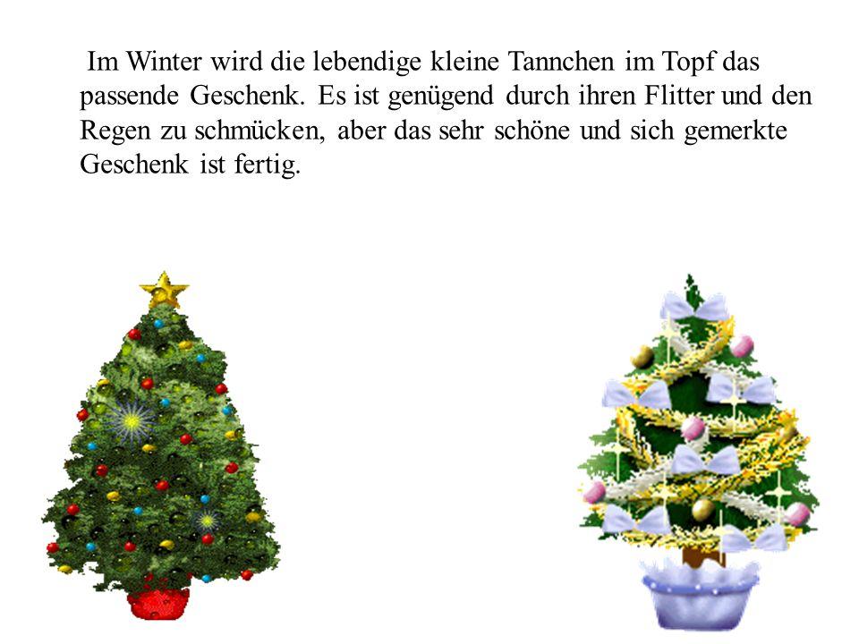 Im Winter wird die lebendige kleine Tannchen im Topf das passende Geschenk.