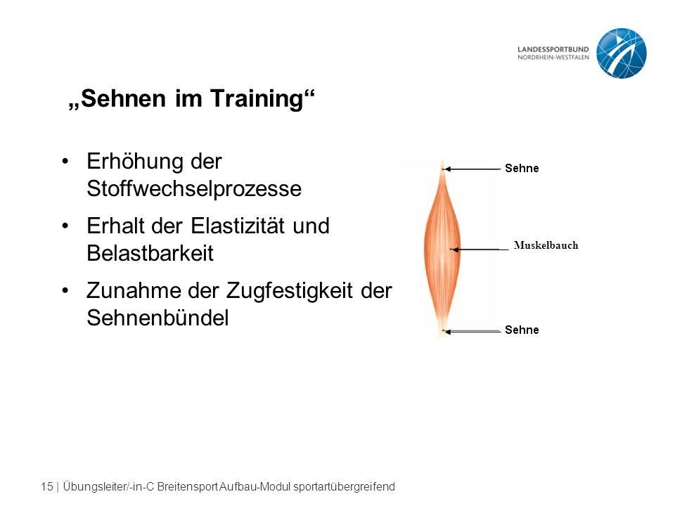 """""""Sehnen im Training Erhöhung der Stoffwechselprozesse"""