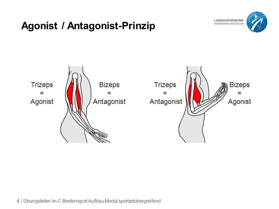 Agonist / Antagonist-Prinzip