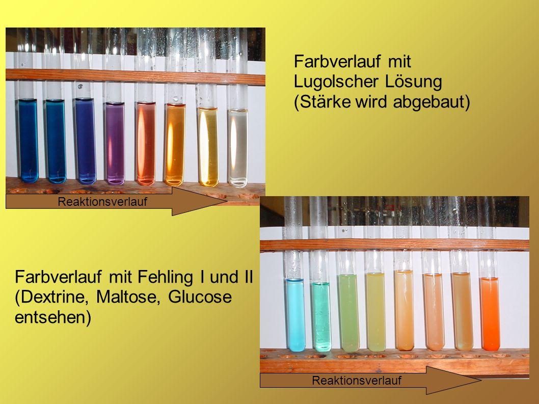 Farbverlauf mit Lugolscher Lösung (Stärke wird abgebaut)