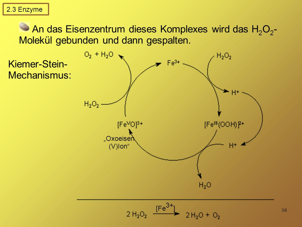 Kiemer-Stein-Mechanismus:
