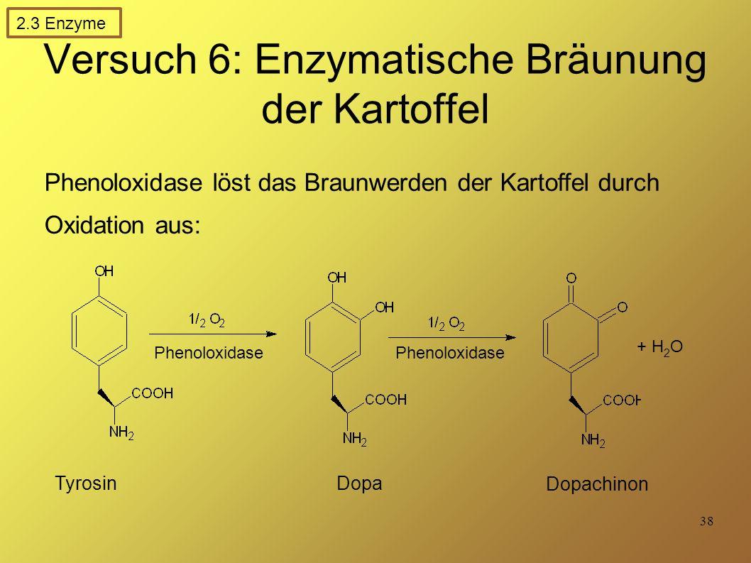 Versuch 6: Enzymatische Bräunung der Kartoffel