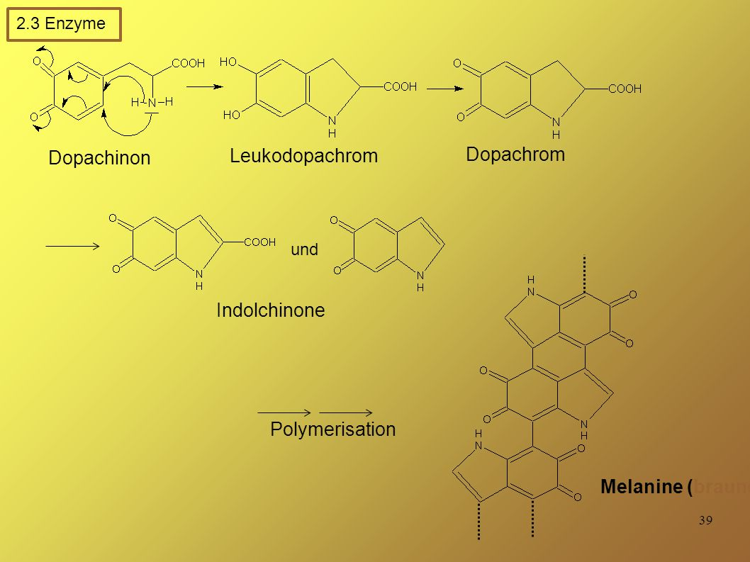 Melanine (braune Pigmente)