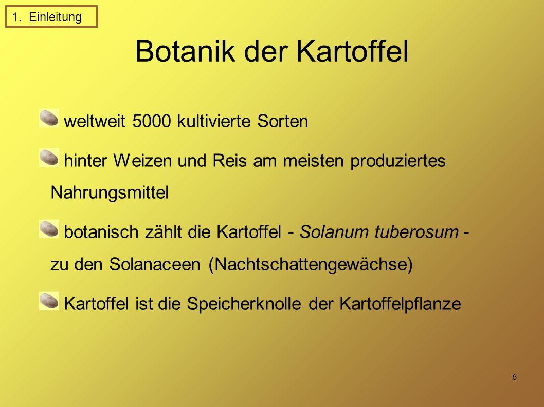 Botanik der Kartoffel weltweit 5000 kultivierte Sorten