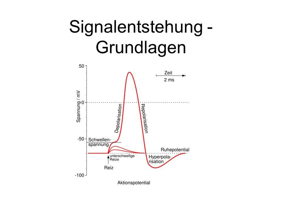 Signalentstehung - Grundlagen