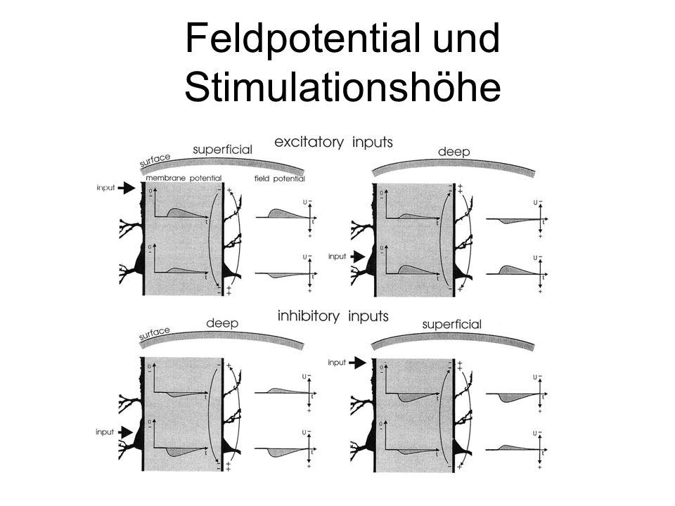 Feldpotential und Stimulationshöhe