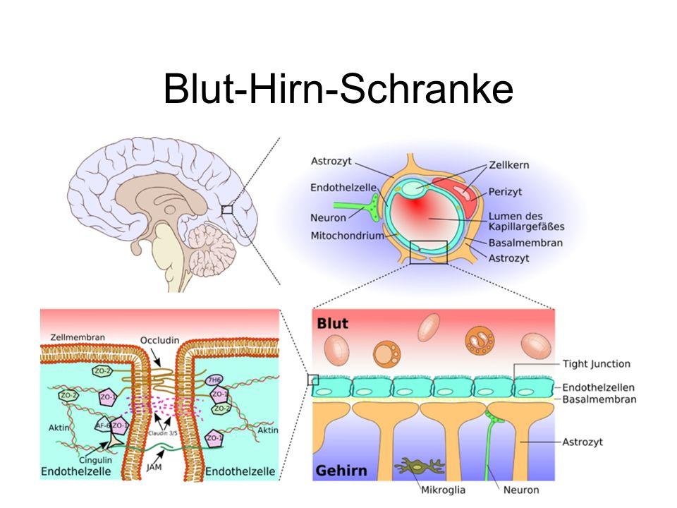 Blut-Hirn-Schranke