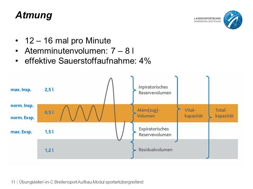 Atmung 12 – 16 mal pro Minute Atemminutenvolumen: 7 – 8 l
