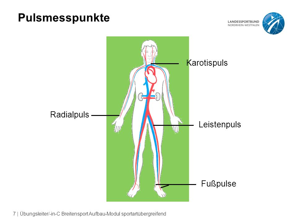 Pulsmesspunkte Karotispuls Radialpuls Leistenpuls Fußpulse