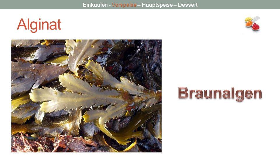 Alginat Braunalgen Bildquelle: Wikpedia