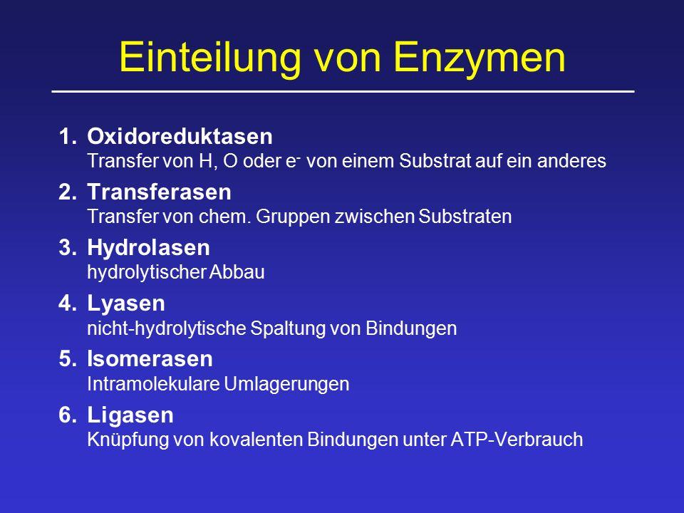 Einteilung von Enzymen