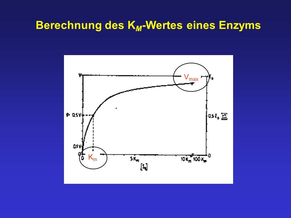 Berechnung des KM-Wertes eines Enzyms