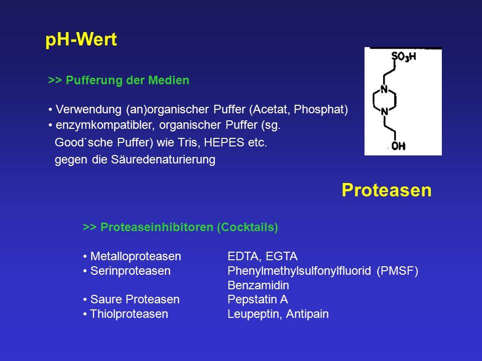 pH-Wert Proteasen >> Pufferung der Medien