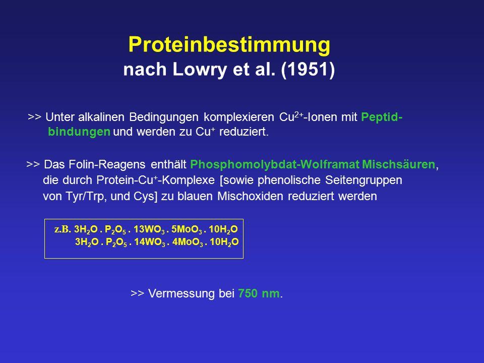 Proteinbestimmung nach Lowry et al. (1951)