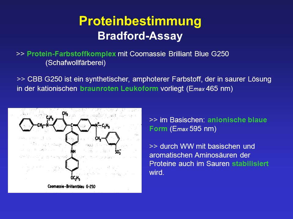 Proteinbestimmung Bradford-Assay