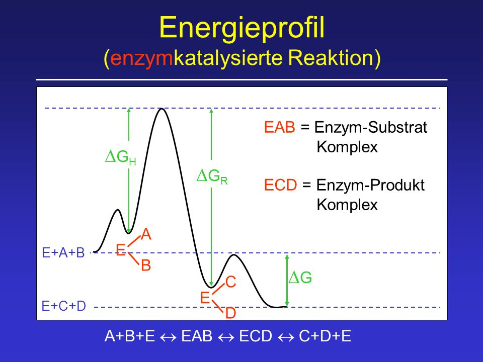 Energieprofil (enzymkatalysierte Reaktion)