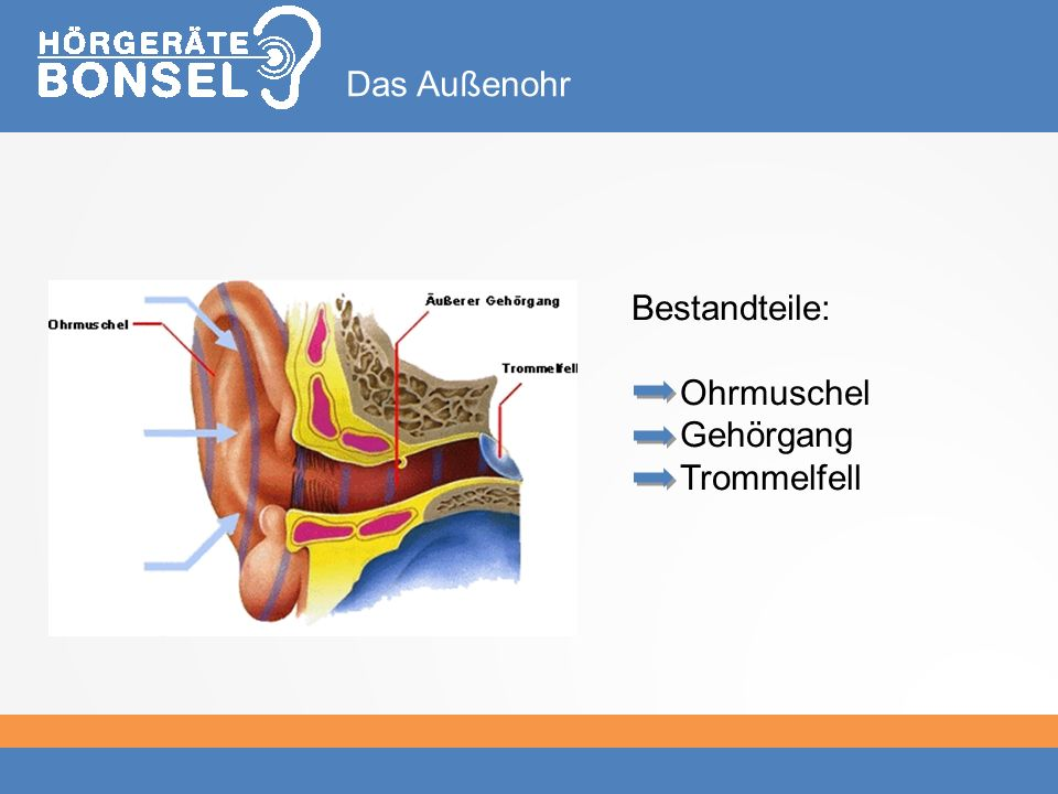 Das Außenohr Bestandteile: Ohrmuschel Gehörgang Trommelfell