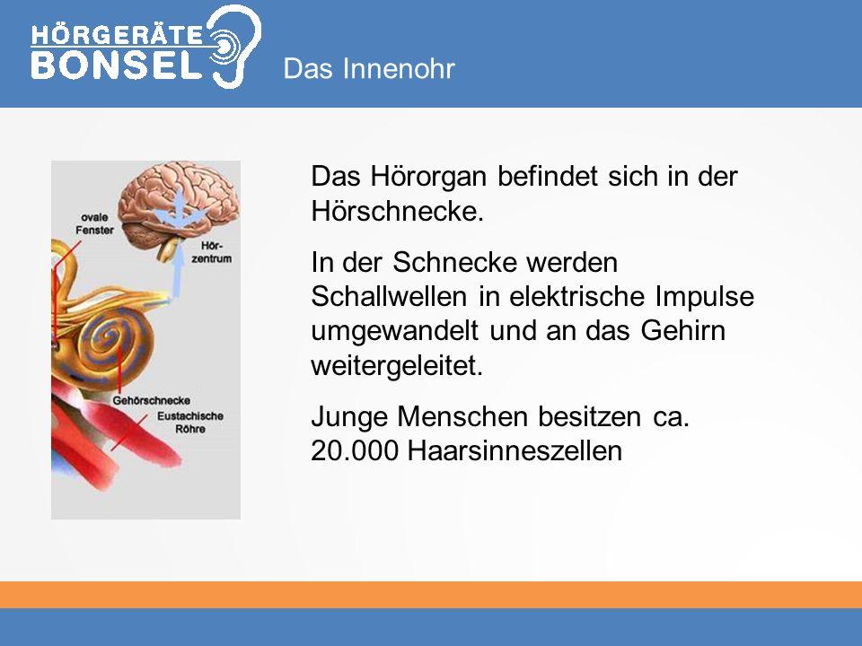 Das Innenohr Das Hörorgan befindet sich in der Hörschnecke.