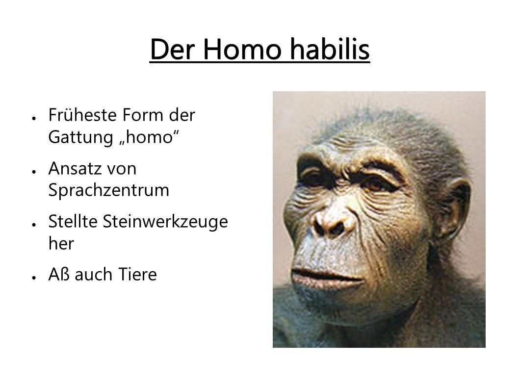 """Der Homo habilis Früheste Form der Gattung """"homo"""