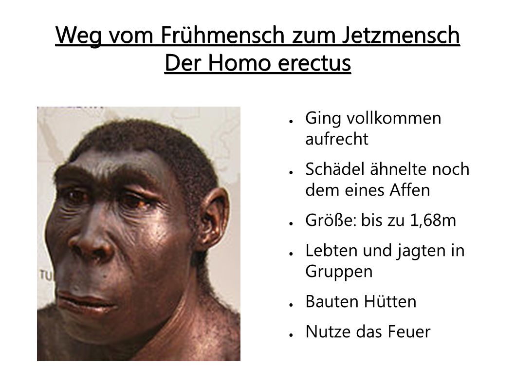 Homo sapiens  Meaning amp Stages of Human Evolution