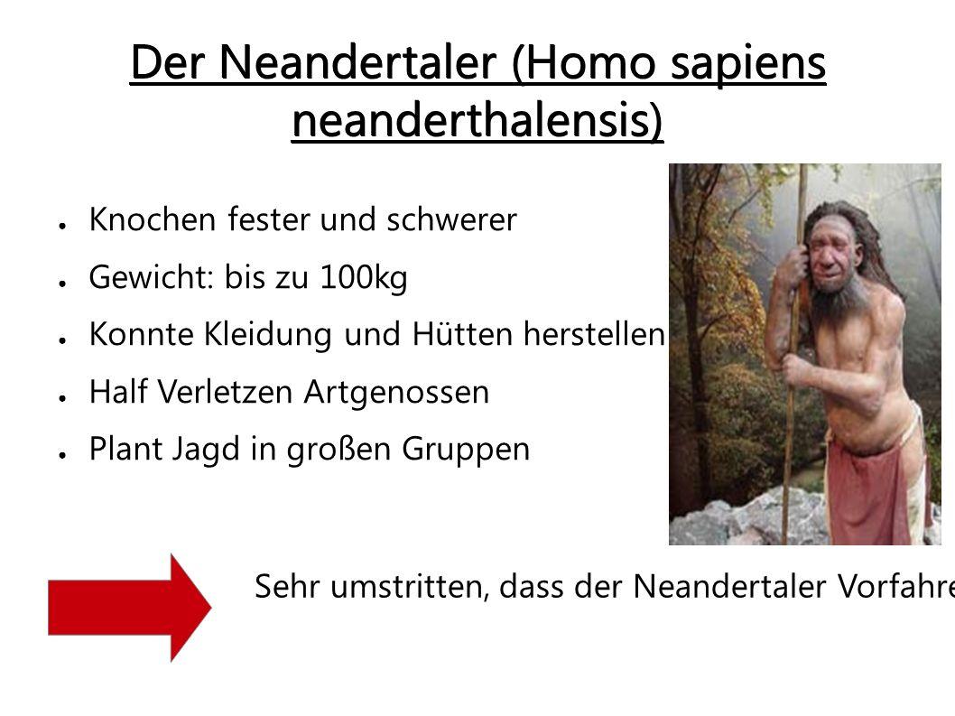 Der Neandertaler (Homo sapiens neanderthalensis)
