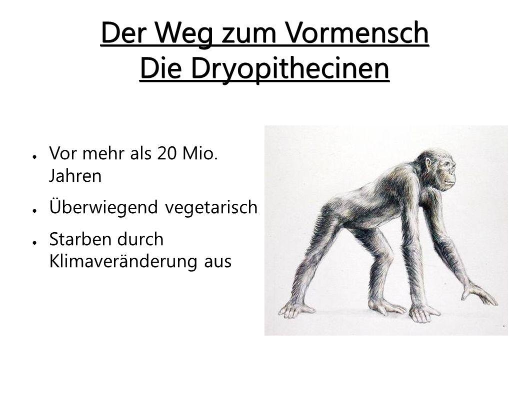Der Weg zum Vormensch Die Dryopithecinen