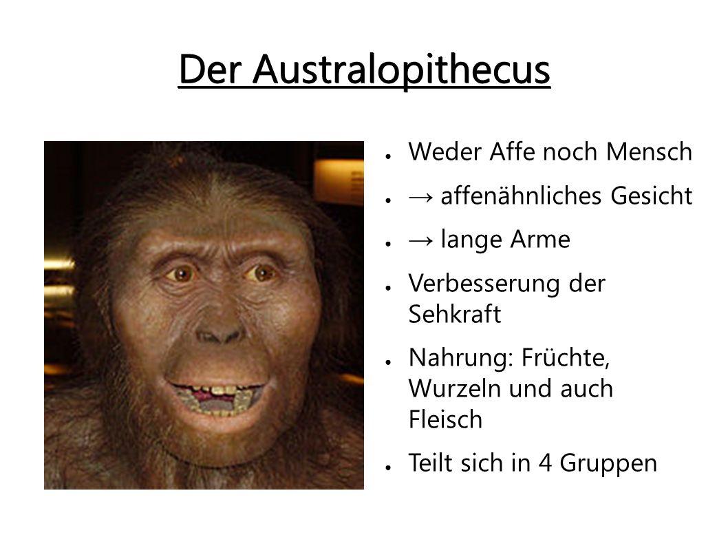 Der Australopithecus Weder Affe noch Mensch → affenähnliches Gesicht