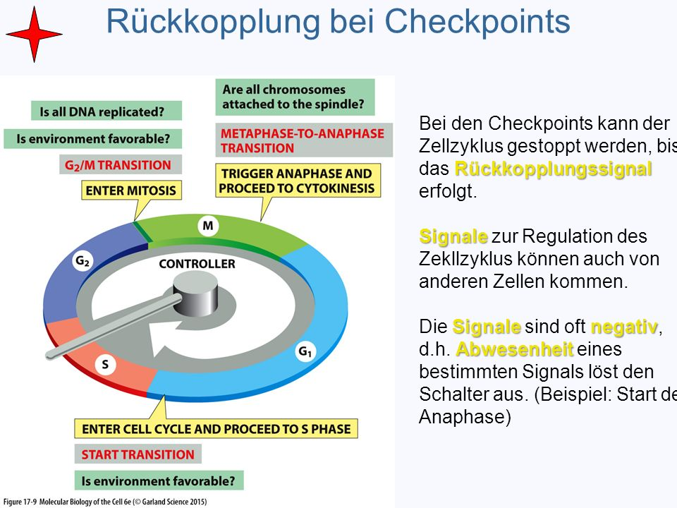 Rückkopplung bei Checkpoints