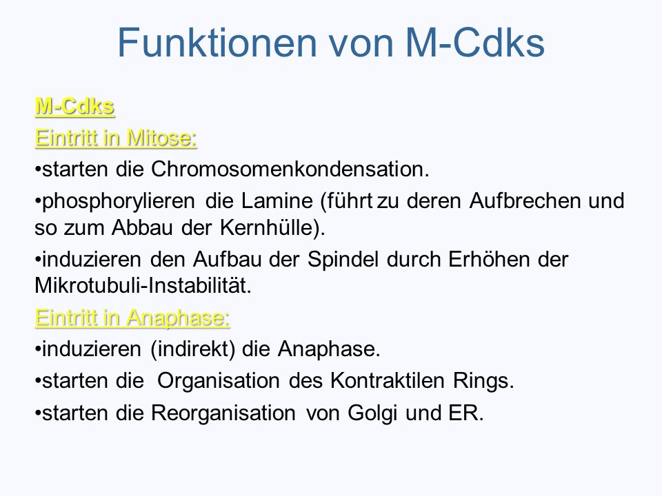Funktionen von M-Cdks M-Cdks Eintritt in Mitose: