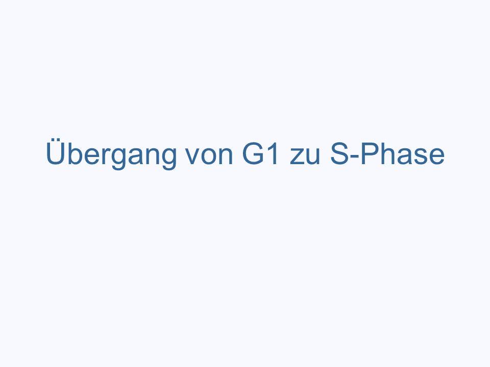 Übergang von G1 zu S-Phase