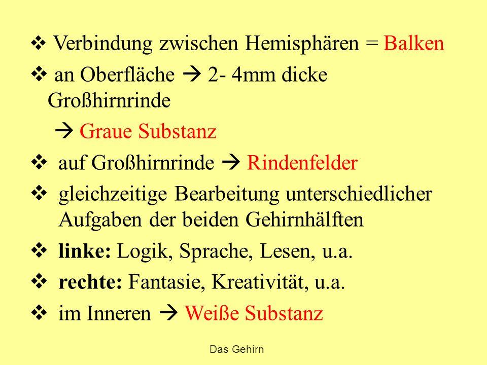 Das Gehirn Fuchsbandwurm