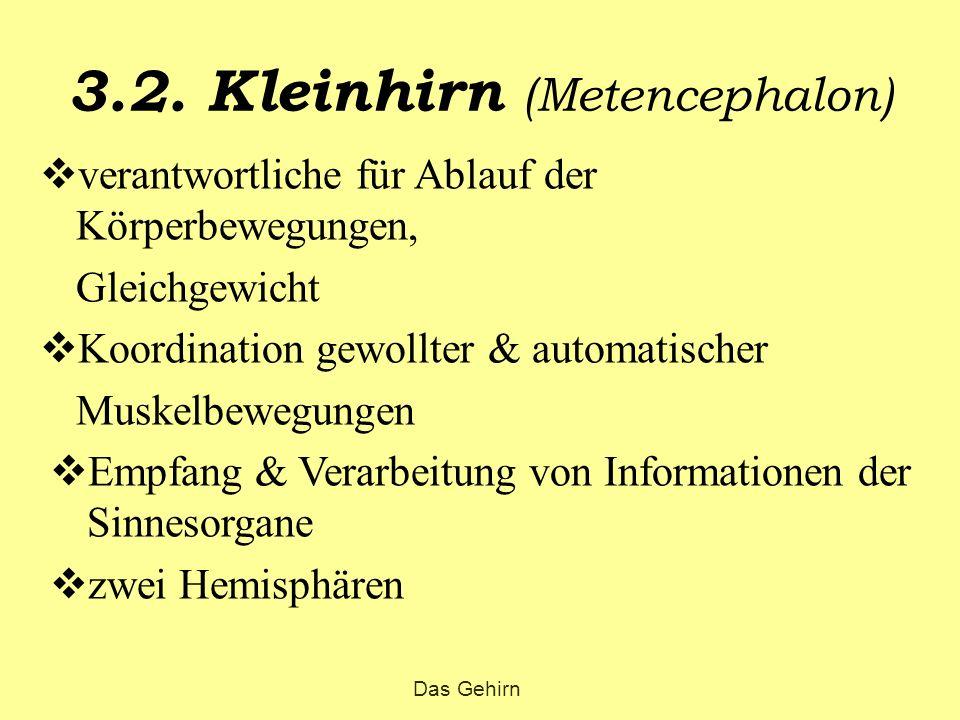 3.2. Kleinhirn (Metencephalon)