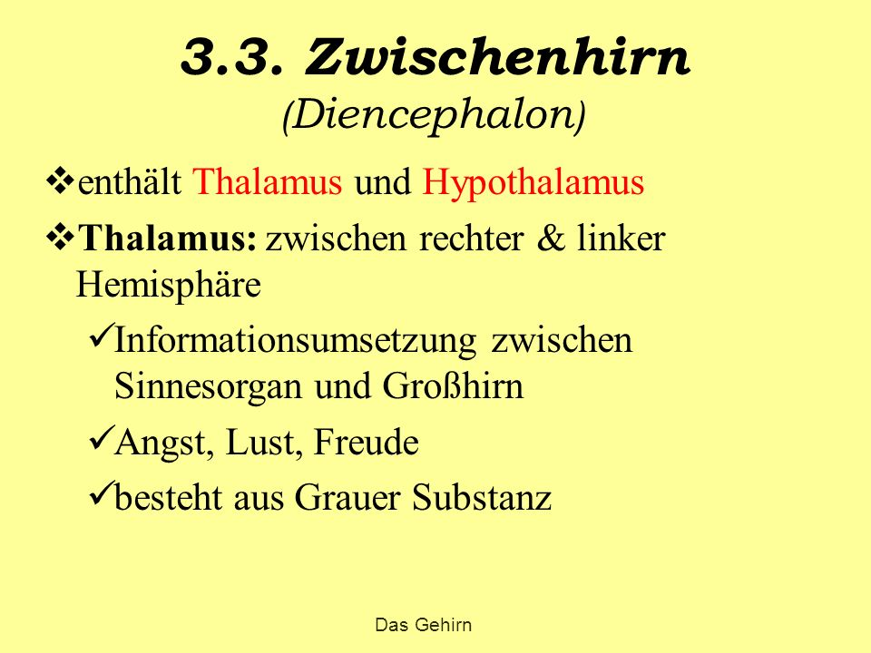 3.3. Zwischenhirn (Diencephalon)