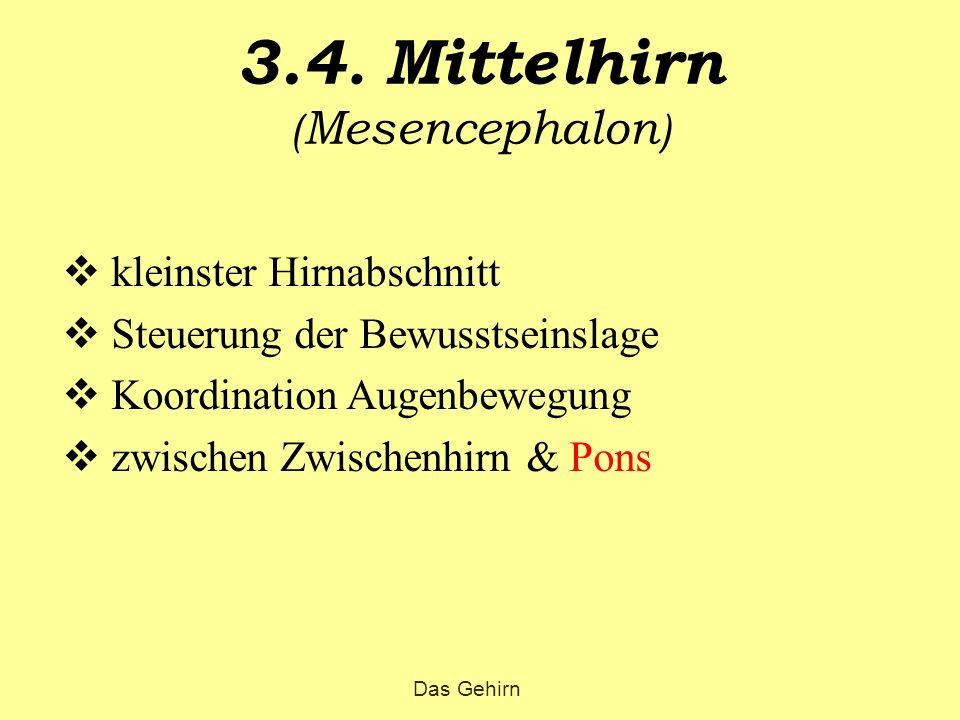 3.4. Mittelhirn (Mesencephalon)