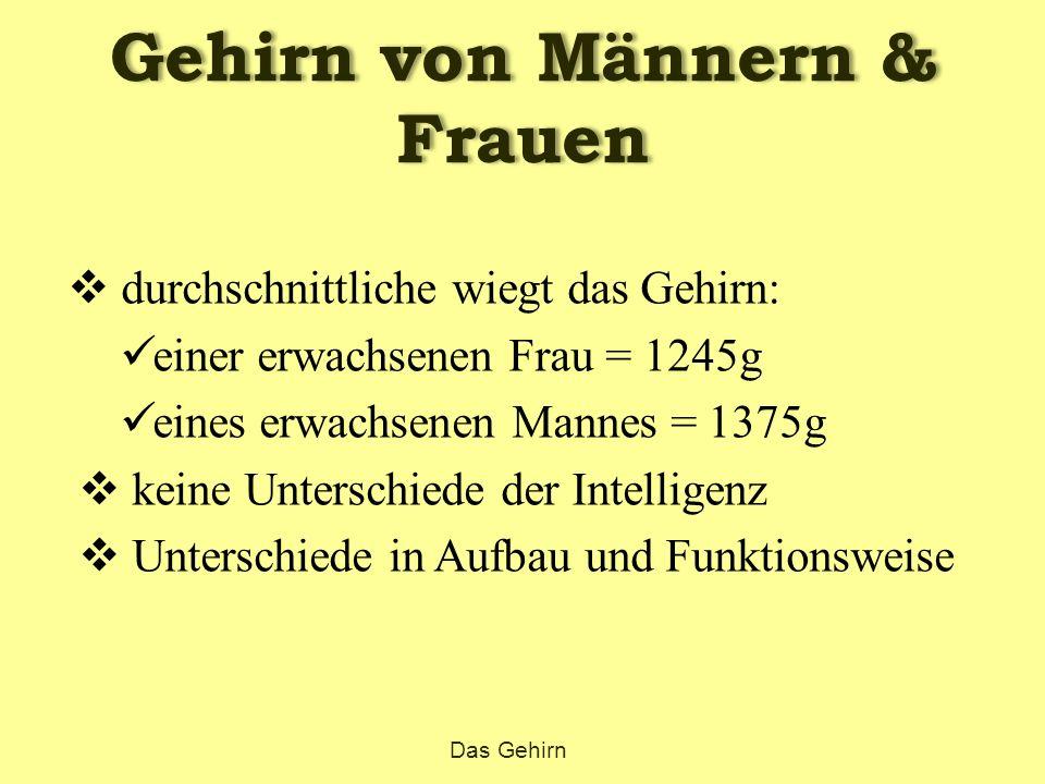 Gehirn von Männern & Frauen