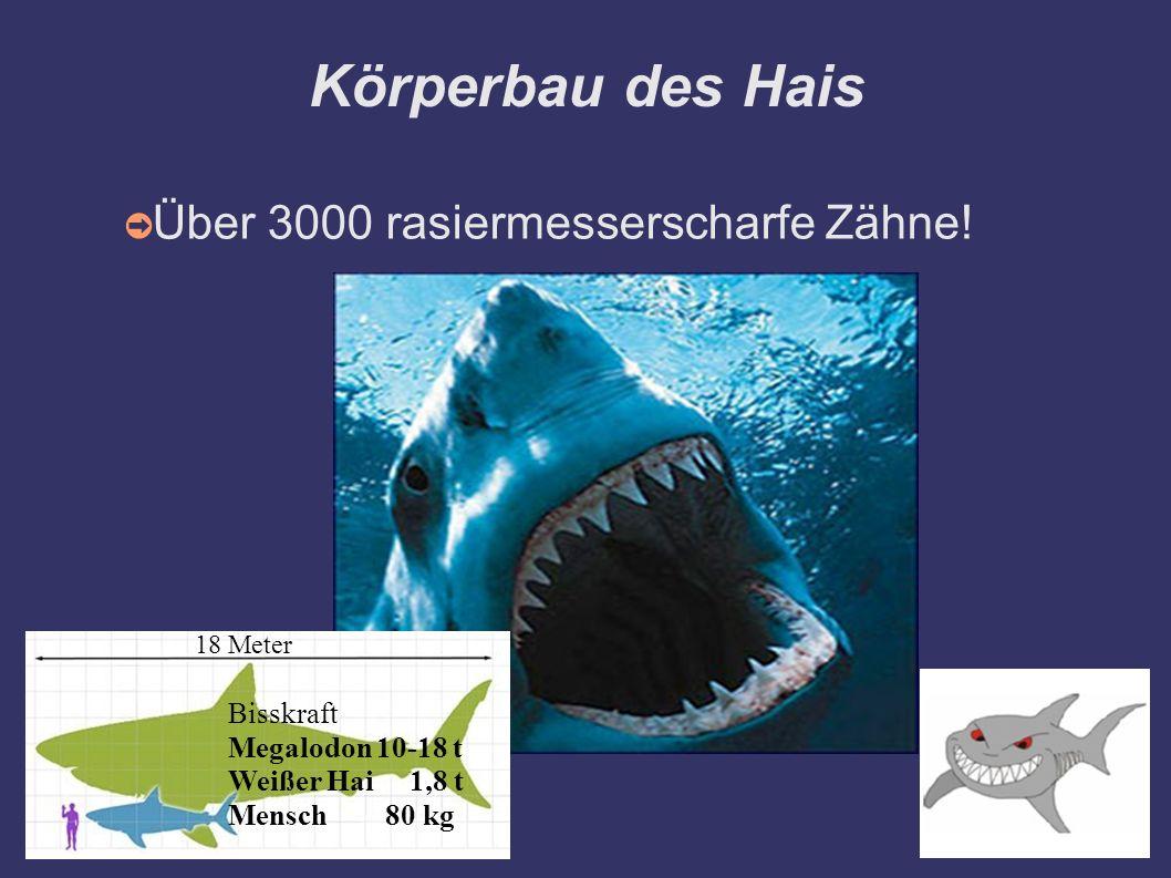 Körperbau des Hais Über 3000 rasiermesserscharfe Zähne! Bisskraft