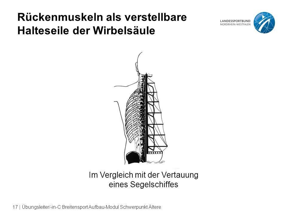 Rückenmuskeln als verstellbare Halteseile der Wirbelsäule