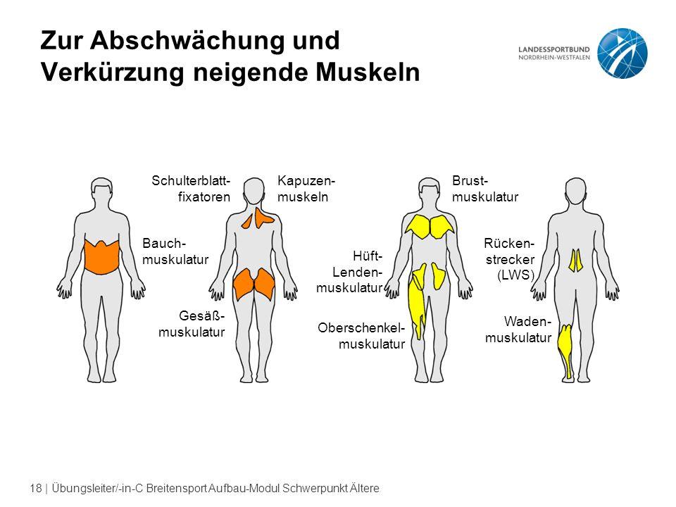 Zur Abschwächung und Verkürzung neigende Muskeln