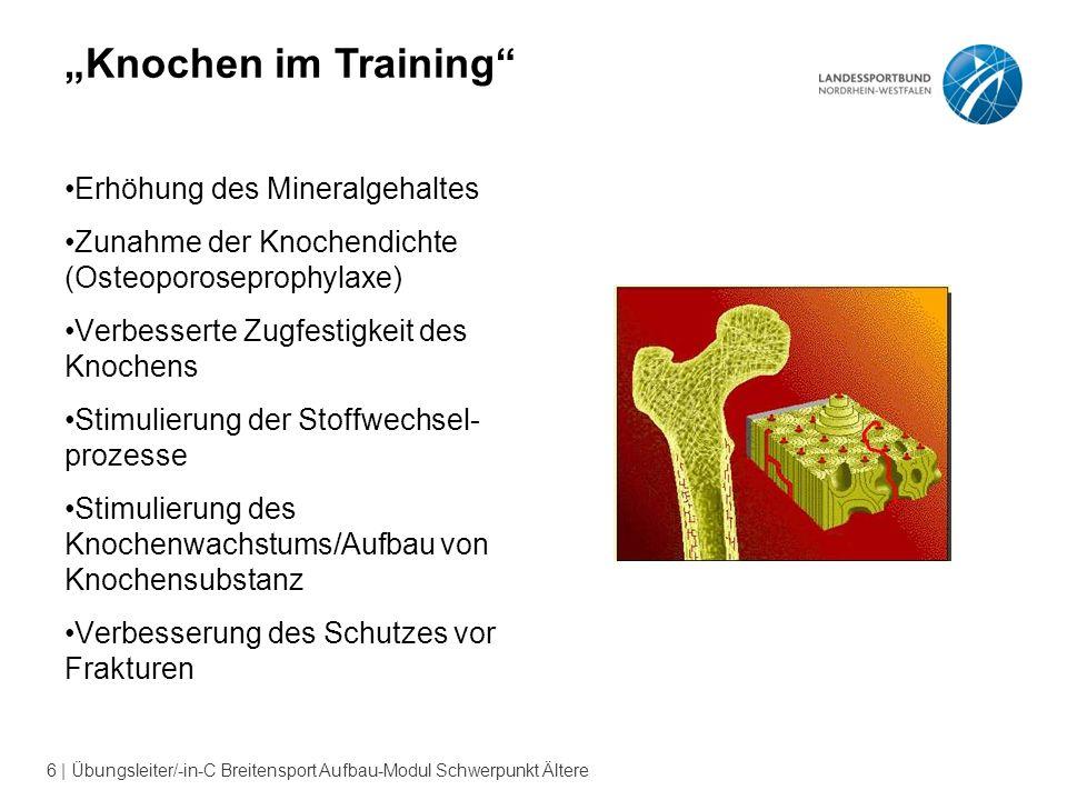 """""""Knochen im Training Erhöhung des Mineralgehaltes"""