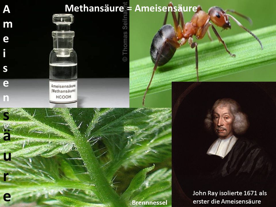 Ameisensäure Methansäure = Ameisensäure
