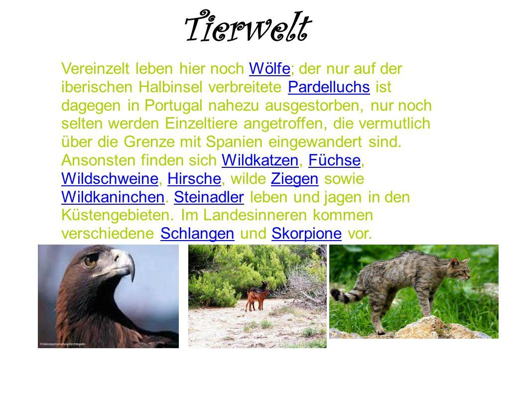 Tierwelt