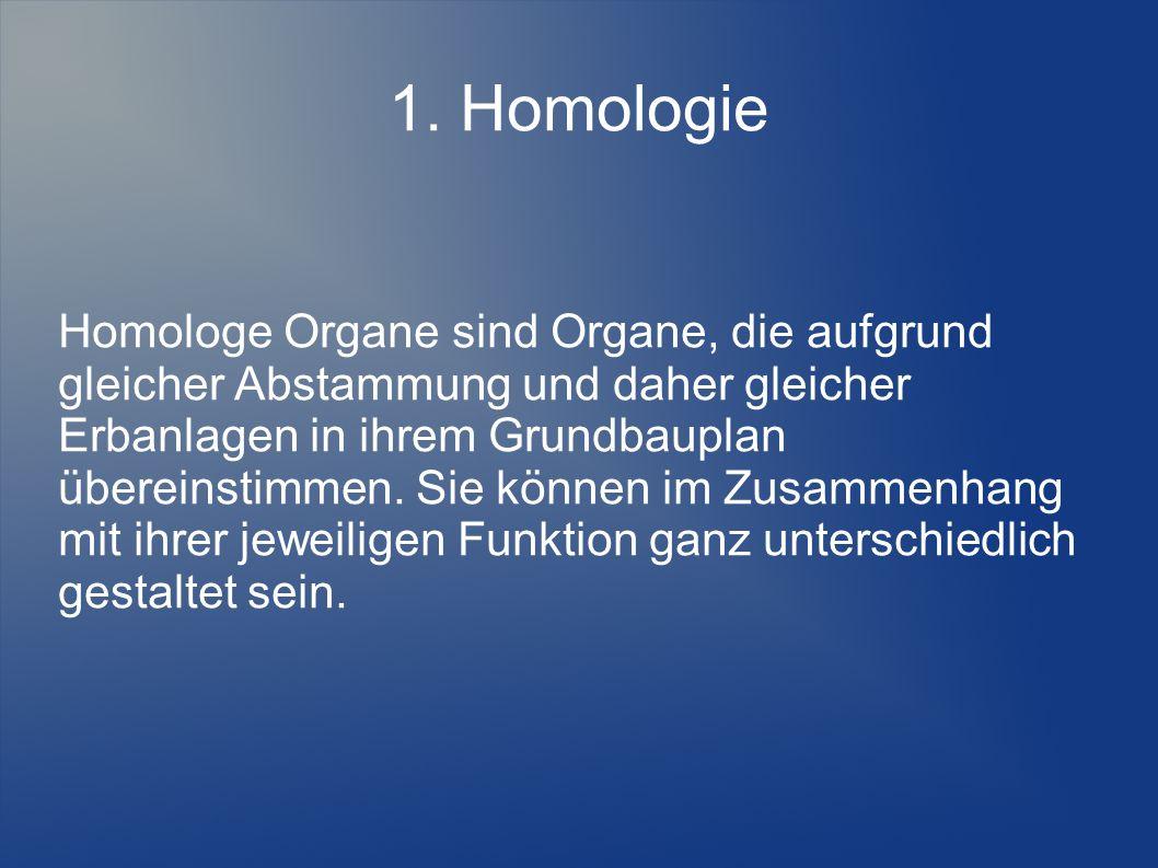 Homologe Organe sind Organe, die aufgrund gleicher Abstammung und daher gleicher Erbanlagen in ihrem Grundbauplan übereinstimmen. Sie können im Zusammenhang mit ihrer jeweiligen Funktion ganz unterschiedlich gestaltet sein.