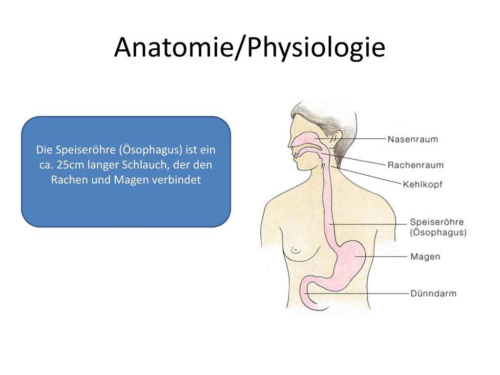 Ziemlich Rachen Anatomie Ppt Galerie - Menschliche Anatomie Bilder ...