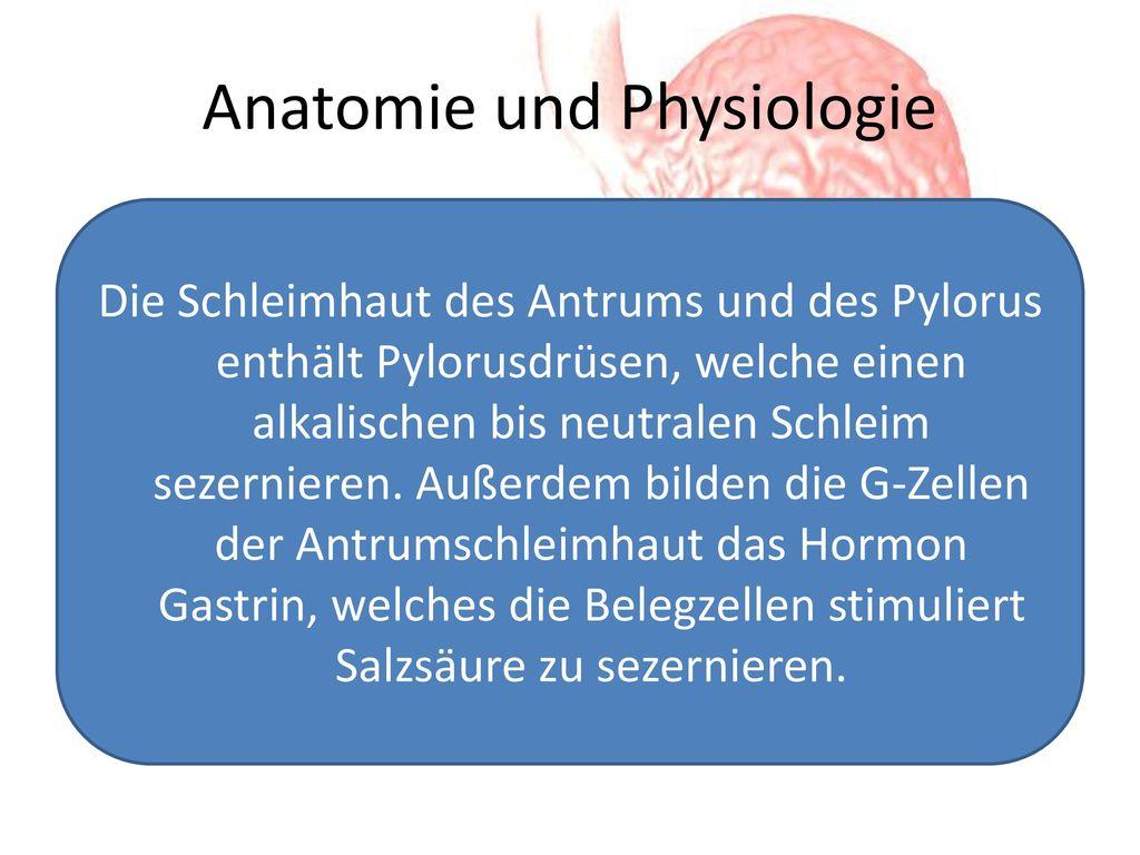 Schön Hormone Der Bauchspeicheldrüse Sezerniert Galerie ...
