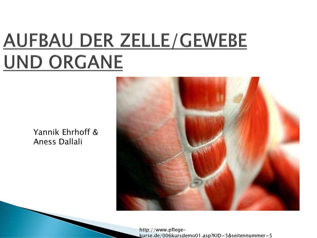 AUFBAU DER ZELLE/GEWEBE UND ORGANE